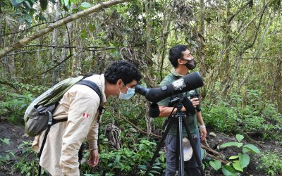 Peru and birdwatching as a national hobby