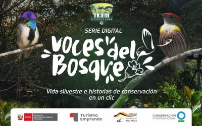 Voices of the forest, digital series release