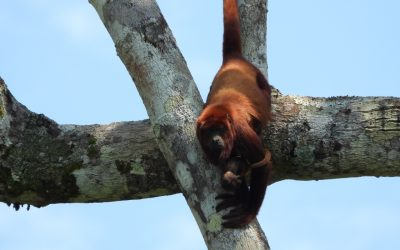 Voices of the Forest: Wildlife in Tingana – Alto Mayo Wetlands